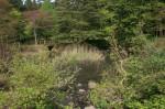 甘蕗のお池